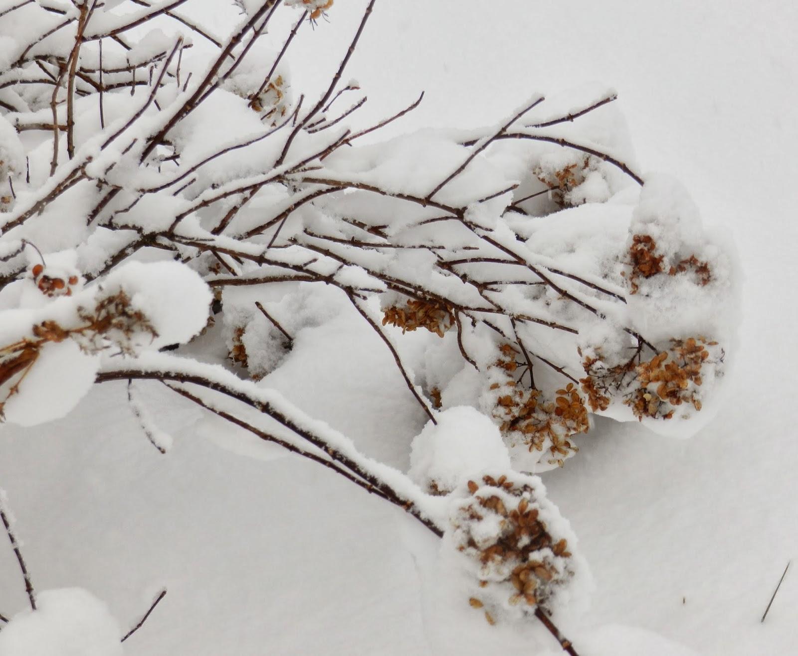 Prairie Rose's Garden: December 2013