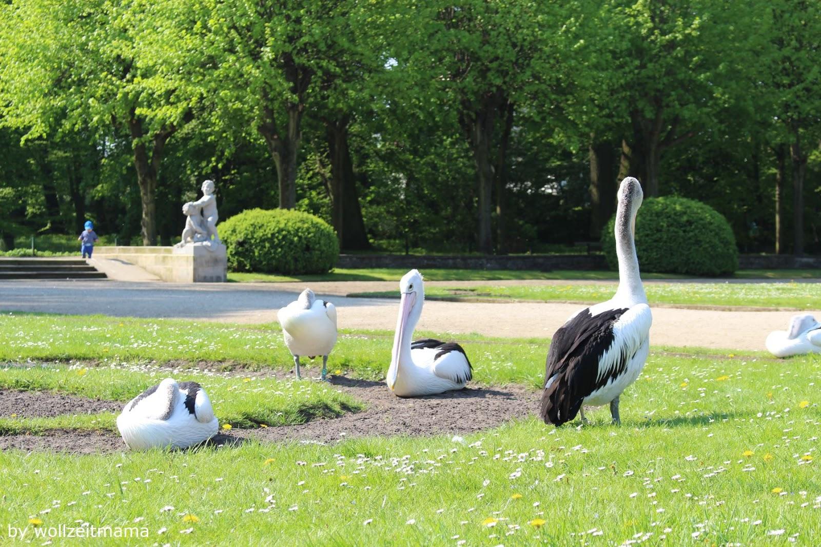 Ausflugstipp : Tierpark Berlin, einer der Lieblingsorte von wollzeitmama