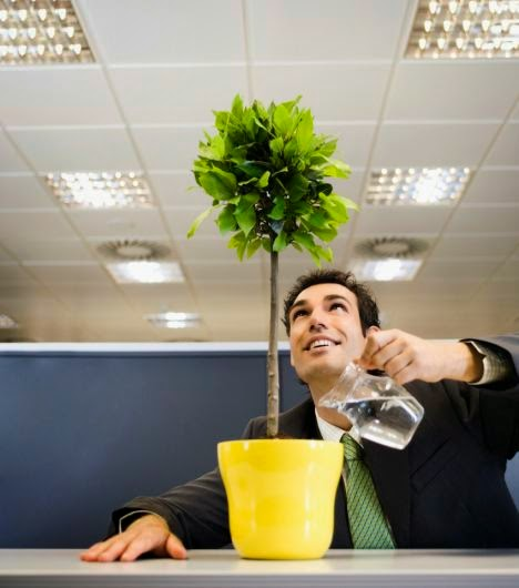 Plants make offices happy