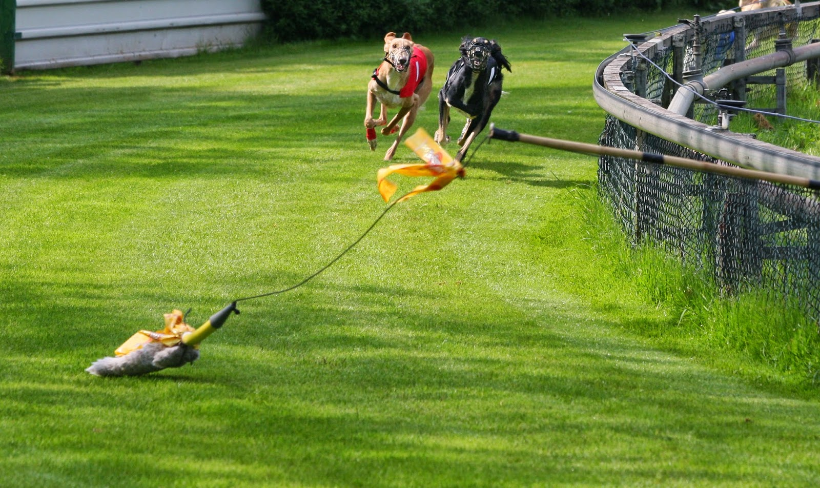 Watch Dogs  Race Baiting