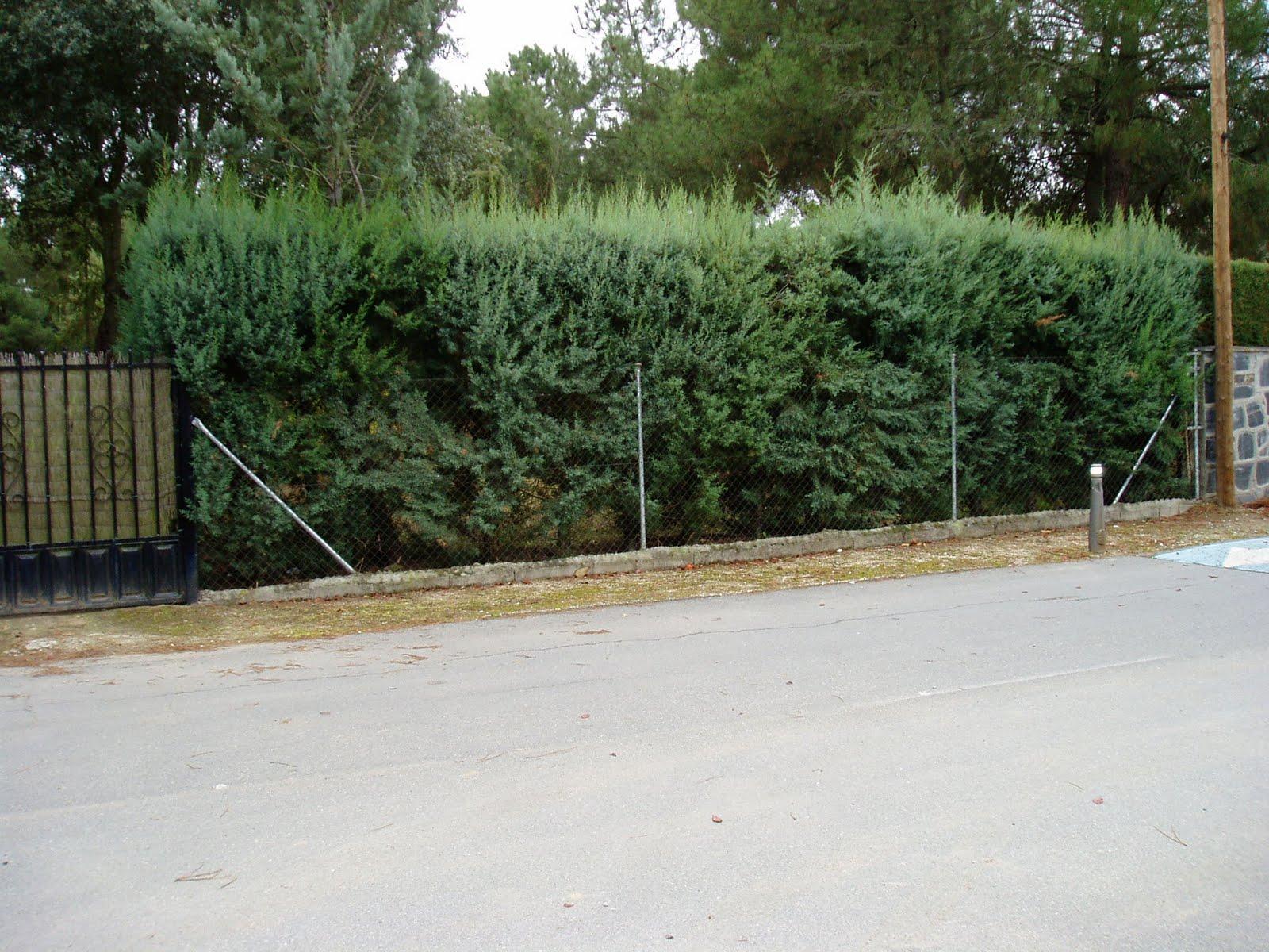 Poda de setos plantas riomoros - Setos de jardin ...
