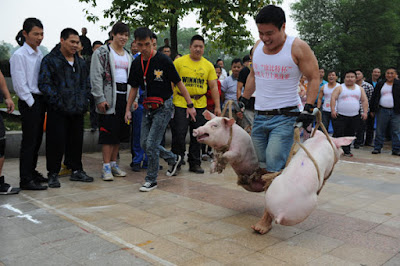 angkat babi