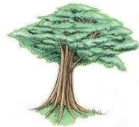 Mitos,pohon,yang,biasa,dibicarakan,orang,pada,malam,hari