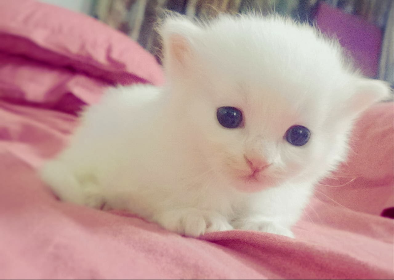 Funny cats - part 91 (40 pics + 10 gifs), cute tiny white kitten