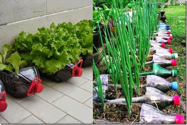 Maestros y maestras eficientes hagamos huertos escolares for Que plantas se siembran en un huerto