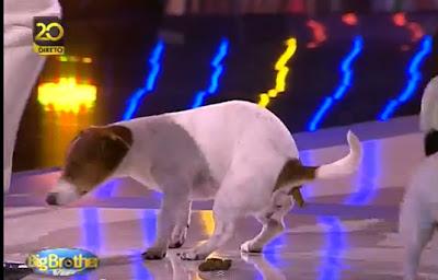 Cadela de Rita Pereira faz necessidades em directo