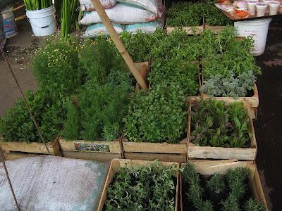 El cuexcomate cuatro mercados 3 flores en la central de for Donde venden plantas