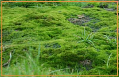 http://1.bp.blogspot.com/-j7bVsmb1law/T10uKgpu0eI/AAAAAAAANsc/LvJyB-v8faw/s1600/lapangan+lumut.jpg