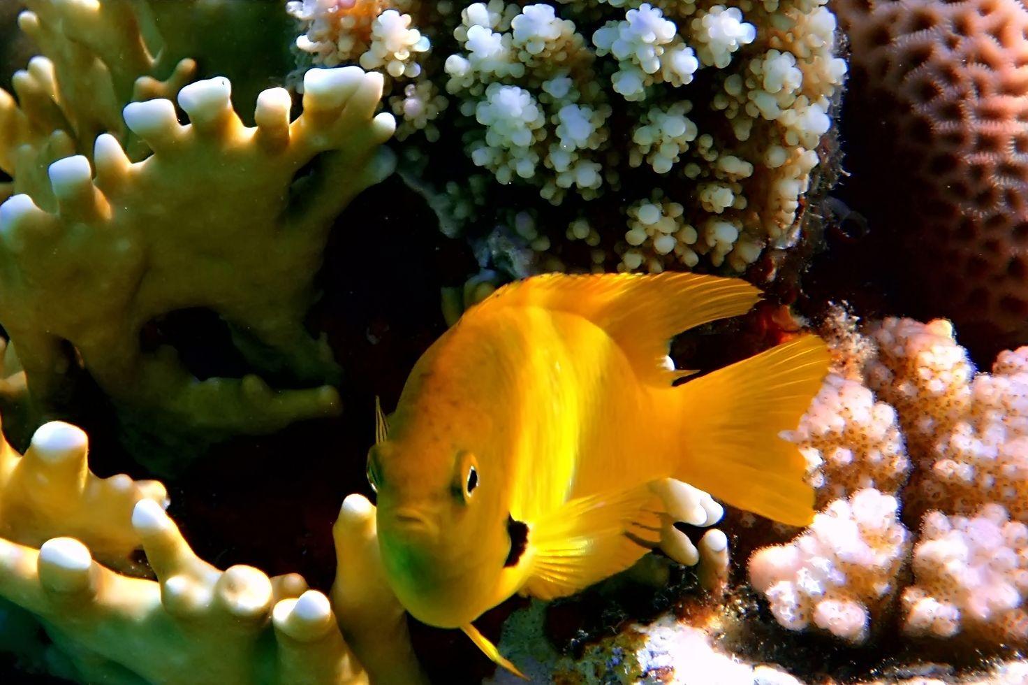 1000 images about fondos del mar on pinterest del mar naturaleza and mars - Fotos fondo del mar ...