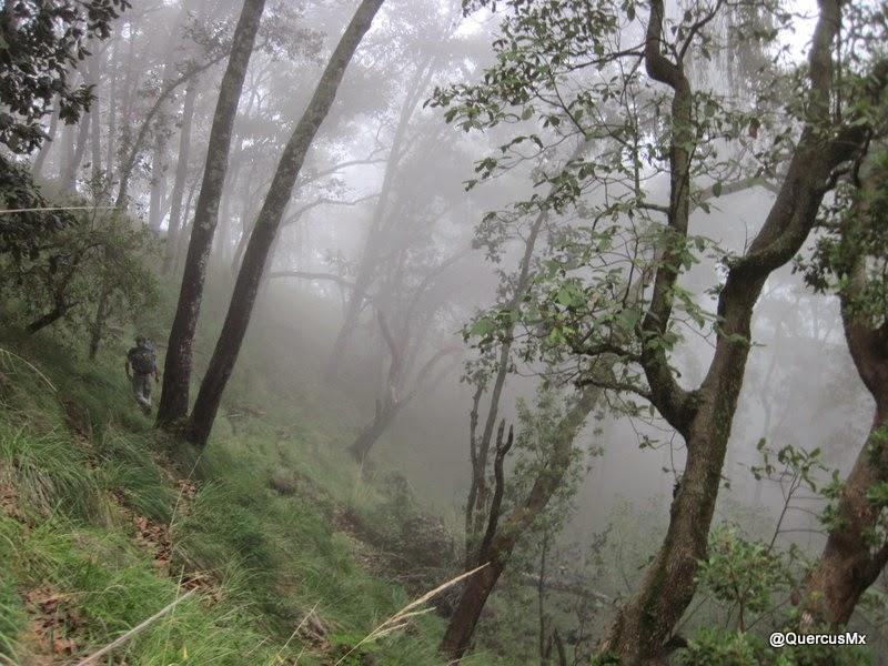 Caminando en el bosque con neblina - Volcán de Tequila