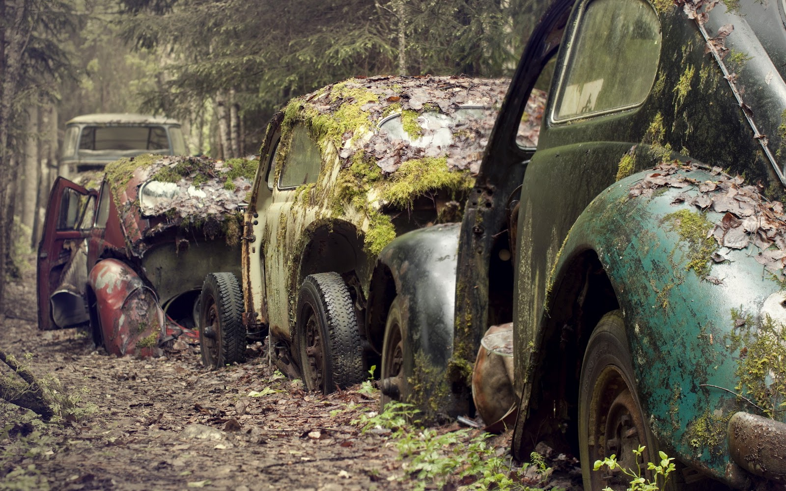 http://1.bp.blogspot.com/-j7yi-MaCnjw/T4gnDbqZKqI/AAAAAAAABTo/jCDM4X4rxLE/s1600/Volkswagen_Beetle_Vintage_Cars_Covered_with_Moss_Awesome_Photography_HD_Wallpaper.jpg