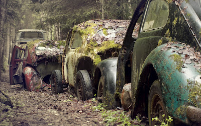 Volkswagen Beetle Vintage Cars Covered with Moss Awesome Photography Car Wallpaper