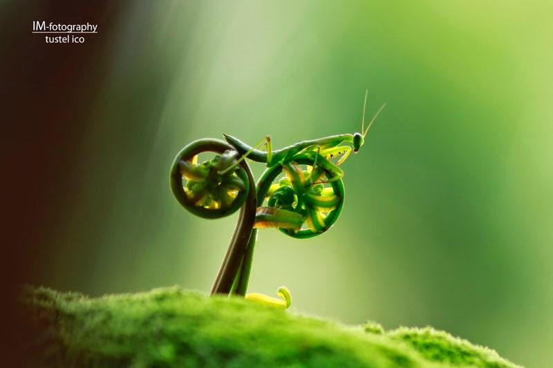 saltamontes con bicicleta