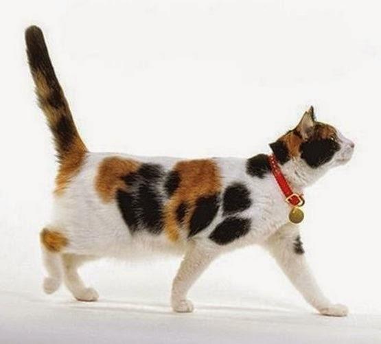 misteri kucing tiga warna