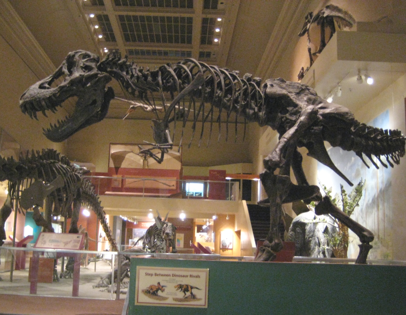 Fossils and Other Living Things: September 2011