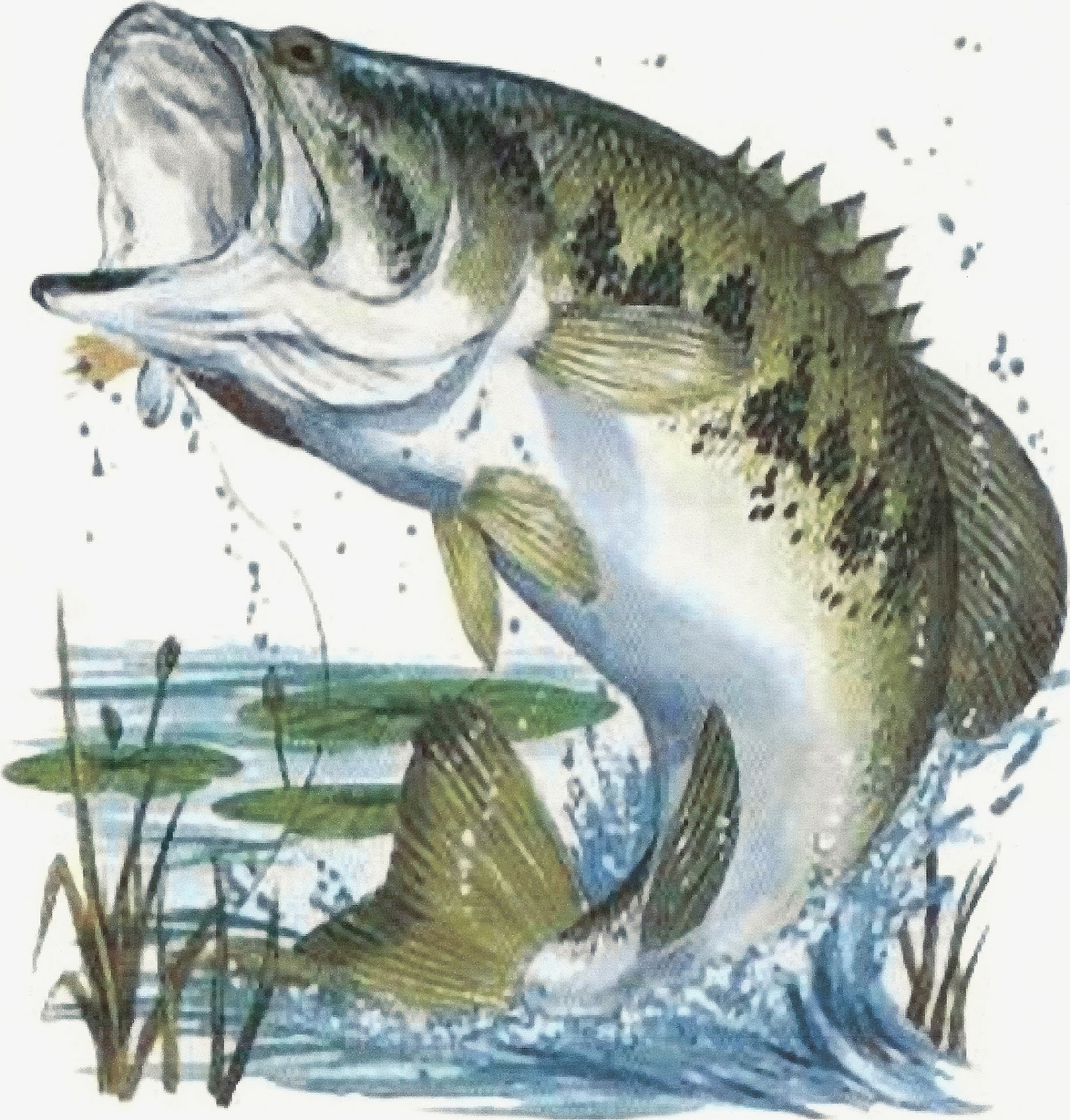 west neck creek ramblings in pursuit of kicker tour nt fish in pursuit of kicker tour nt fish