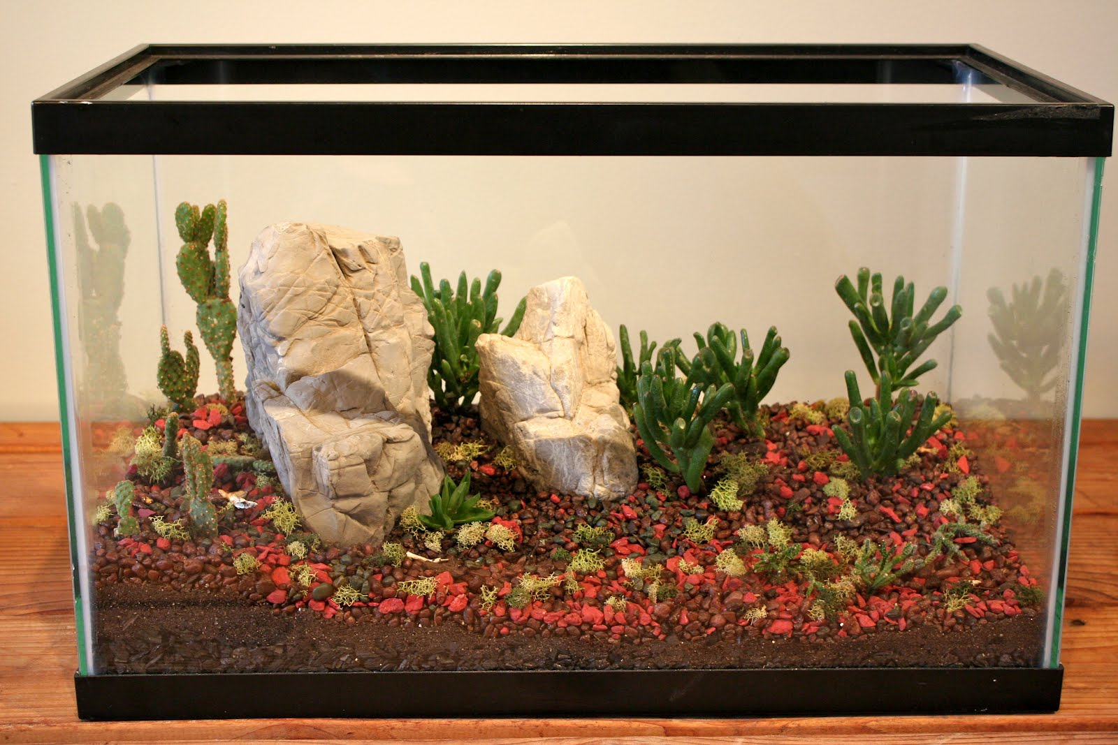 Succulent terrarium in fish tank the for Fish tank terrarium