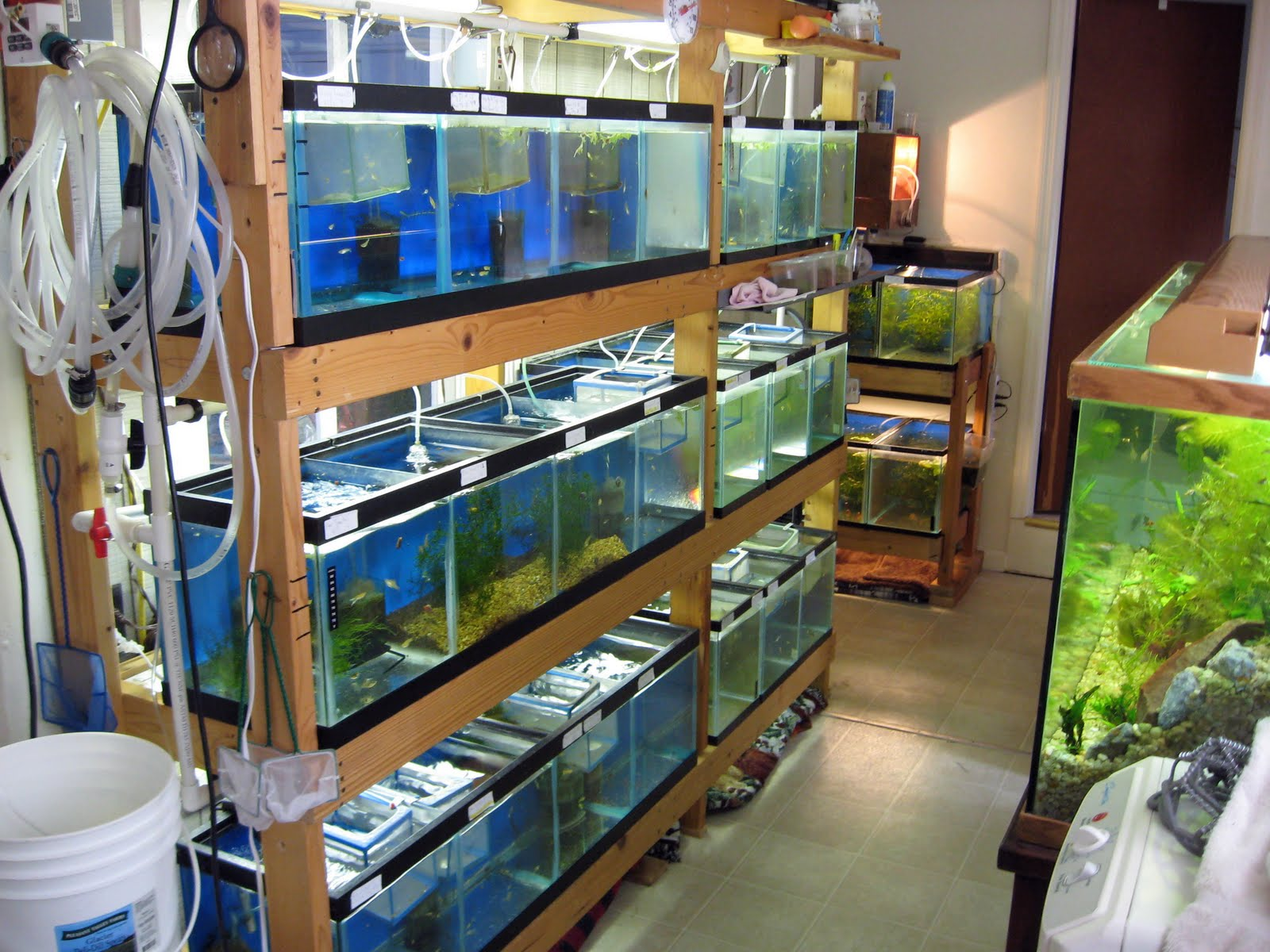 Swordtail Guppies Automated Breeding Systems A Cost