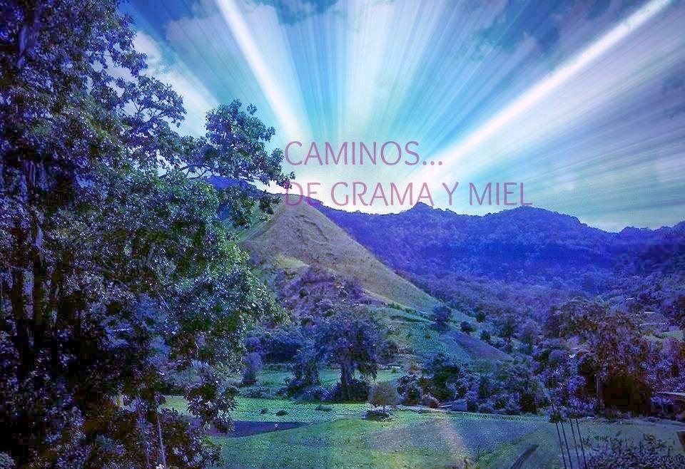 CAMINOS DE GRAMA Y MIEL