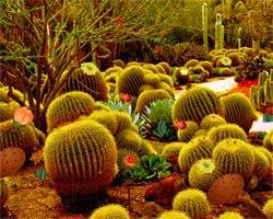 Juegos de Escape Cactus Desert Escape