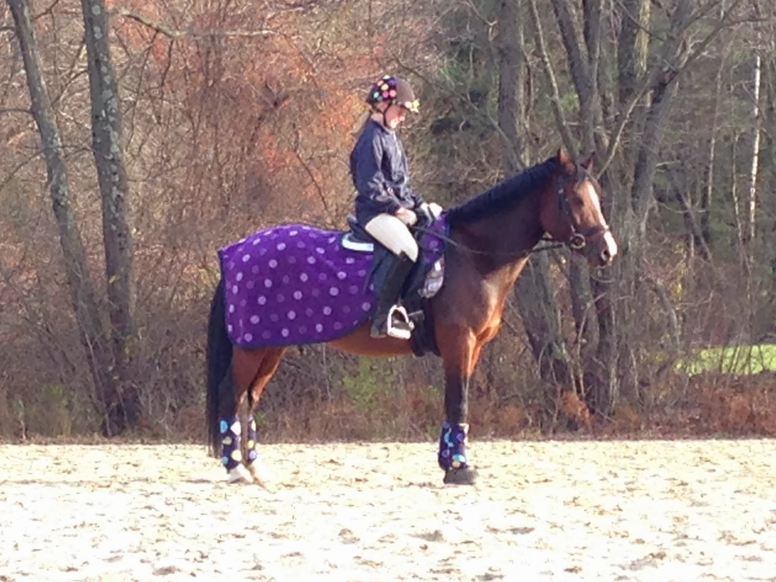 Rantings Of A Horse Mom Blanketing Why Does The Pony Have More Clothes Than I Do