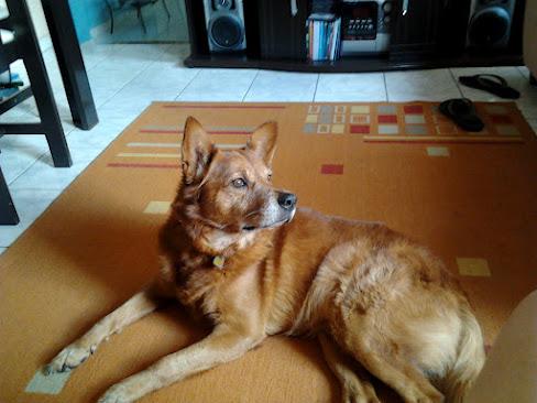 Meu cachorro: Scooby