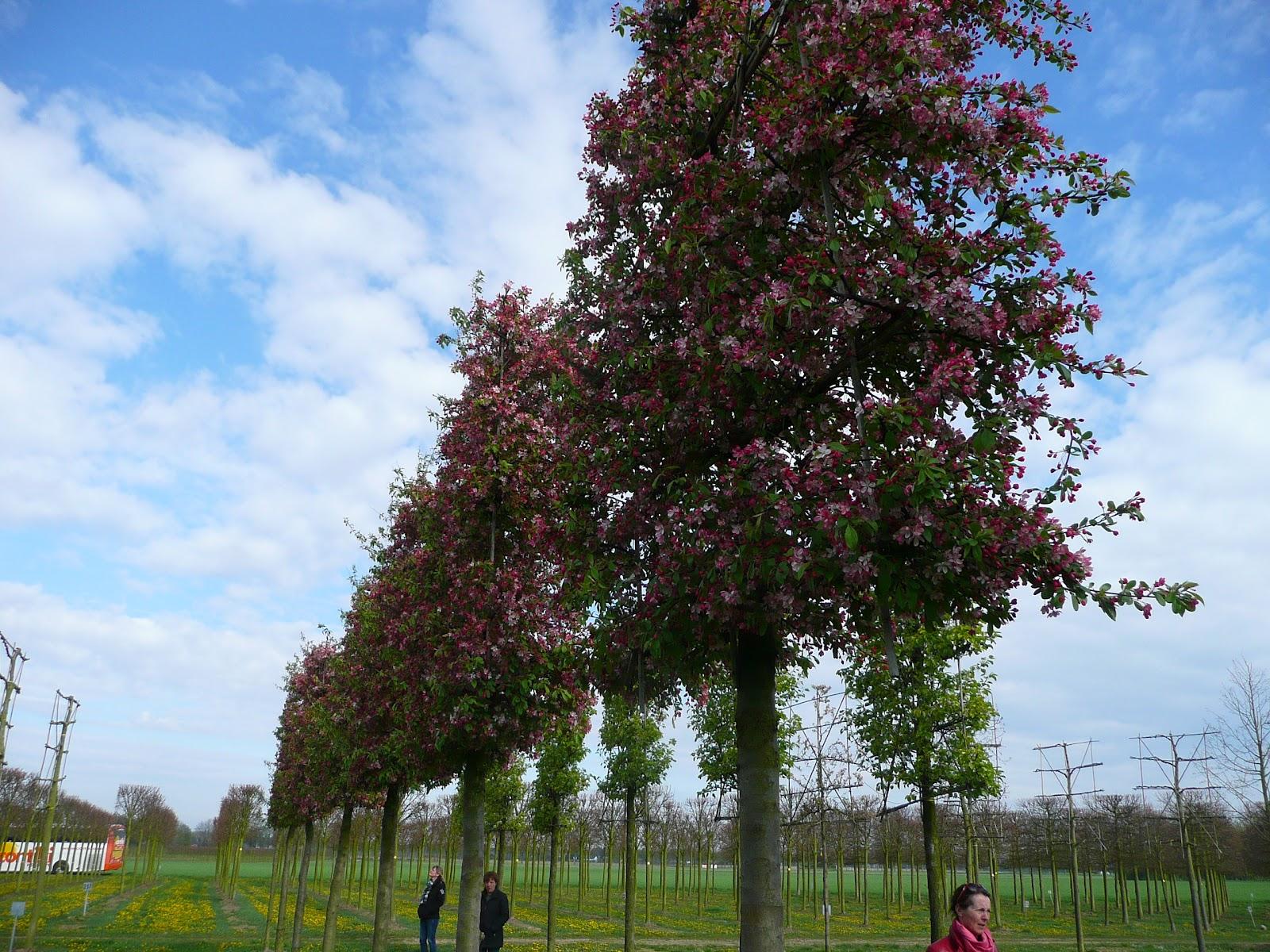 stora träd plantskola