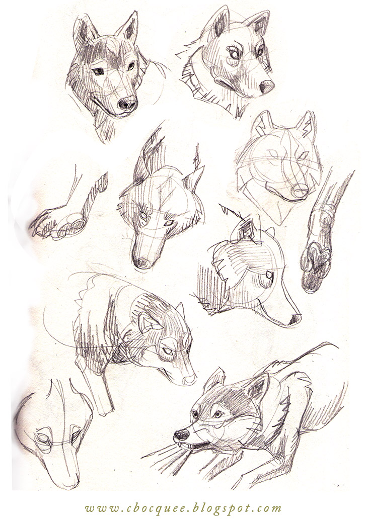 sketchbook studies of wolves