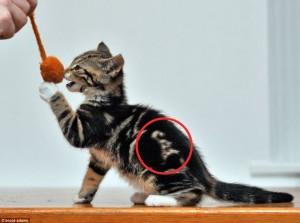 kucing-bertuliskan-cat