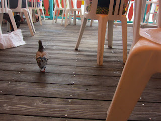 A pigeon walks along the deck under the tables and chairs.