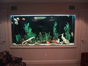 Giant aquariums 500 gallon aquarium fish tank for Fish tanks craigslist