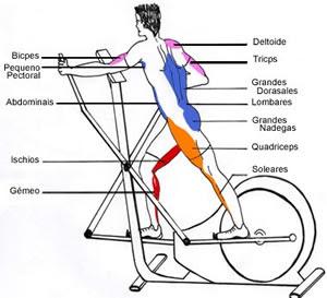 O que é os músculos secundários