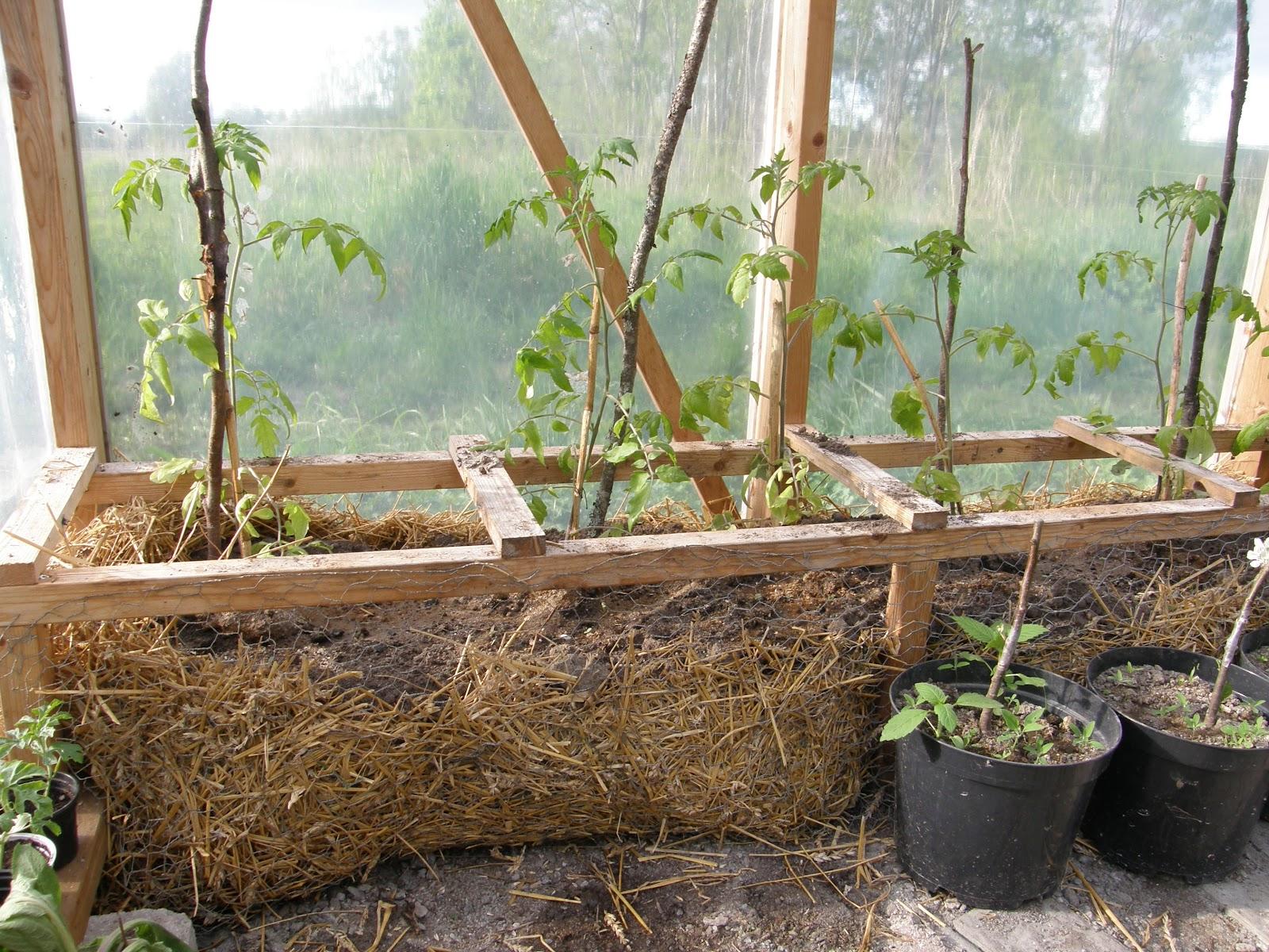 Växthus Odla : Lev mer på mindre juni