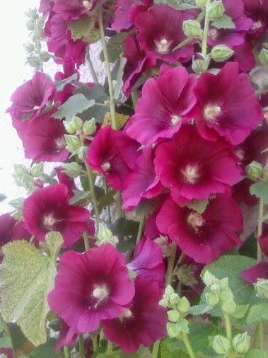 Fleuriste isabelle feuvrier dans le jardin de mamie de port louis 56 - Mamie baise dans le jardin ...