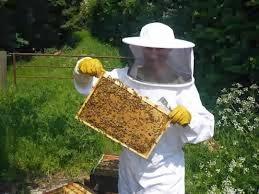 Arıcılık Nedir ve Arı Bakımı Nasıl Yapılır