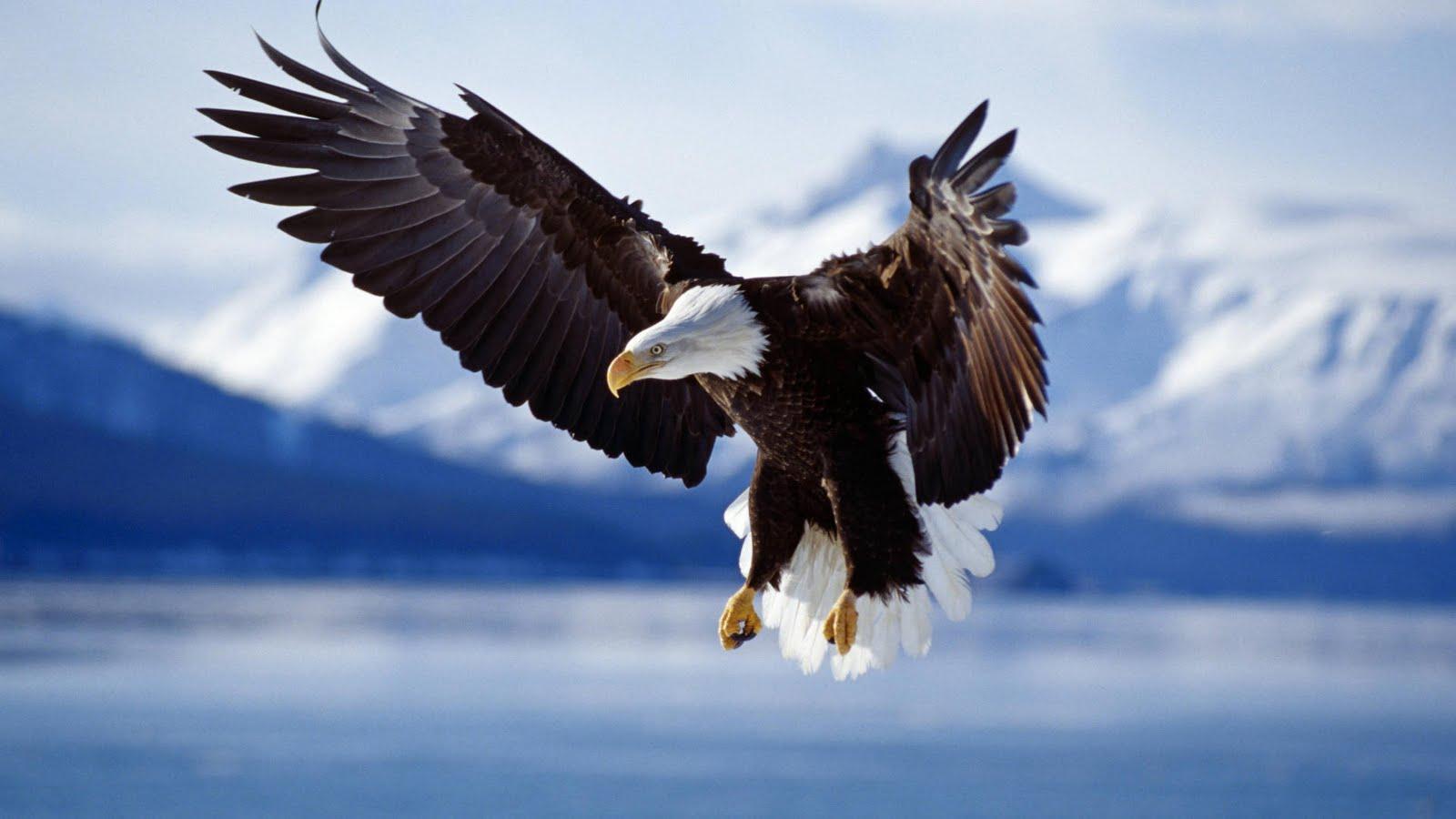 http://1.bp.blogspot.com/-jBeUhzPHgb4/TcvoazgnWuI/AAAAAAAABgU/yLnx1Iy-Ftw/s1600/eagle_kartal_2.jpg