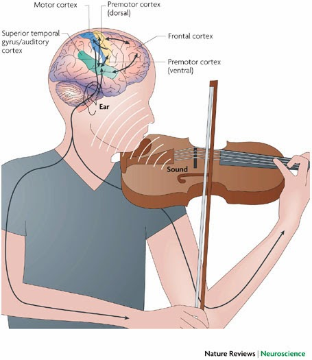 Music affects brain