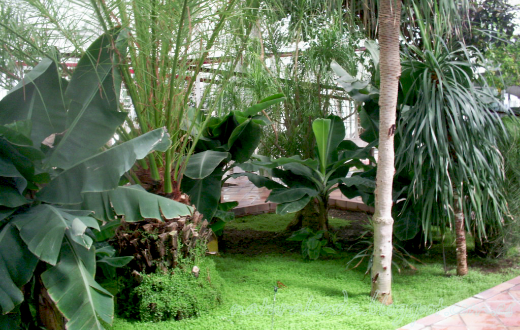 invernadero subtropical