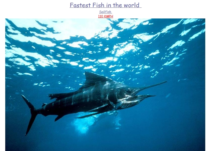 fastest things in the world picxtrema