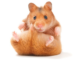 Most Popular Best Pets In The World - Hamsters