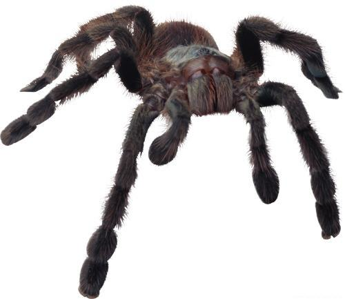 spiders, brown recluse, hobo spider, jumping spider, pest control, exterminator, 99362, walla walla, milton freewater, dayton