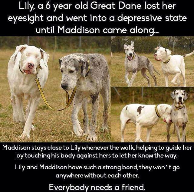 Everybody needs a friend