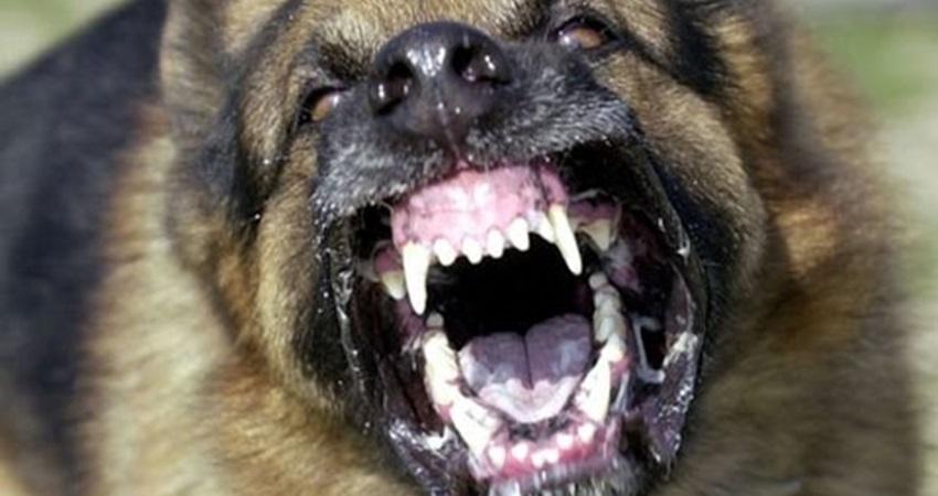 Ηράκλειο: Στο χειρουργείο αγοράκι 6 ετών μετά από δάγκωμα σκύλου