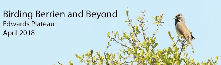 Birding Berrien and Beyond
