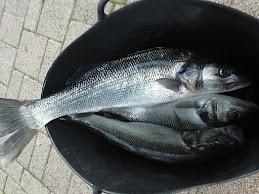 Ultima pesca del año