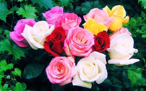 Fotografias de rosas de colores para el Dia de las Madres