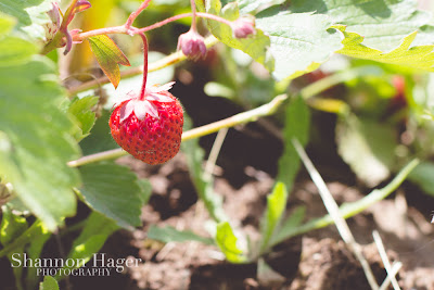 Shannon Hager Photography, Portland Oregon, Strawberry Fields