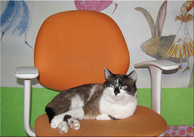 Мой кот Фунтик