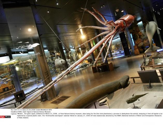 biological freak �������������big squids 09022015