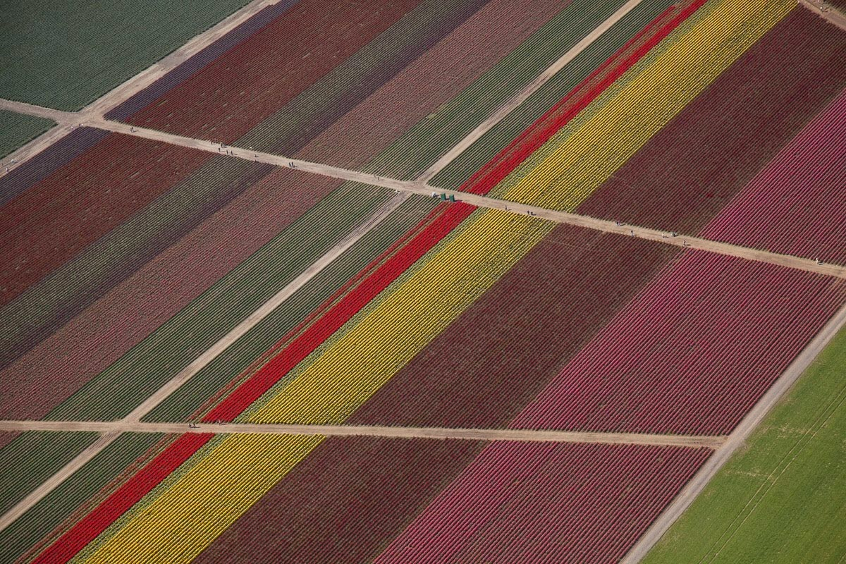 ✈️flying over tulip fields yesterday.